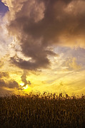 Michael Huddleston - Sunset Corn Field in...