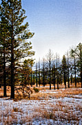 Tall Trees Framed Prints - Sunset Crater Vertical Framed Print by Gilbert Artiaga