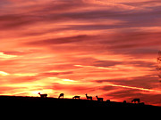 Deer Silhouette Prints - Sunset Deer Too Print by Jk Images