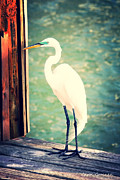 Egret Art - Sunset Dock Visitor by Carol Groenen
