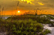 Sea Oats Photo Prints - Sunset Dunes Print by Marvin Spates