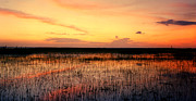 Chris Kusik Framed Prints - Sunset. East Lake Toho. Framed Print by Chris  Kusik