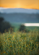 Sunset Field Print by Mike Lee