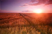 Cereal Art - Sunset field scenery by Michal Bednarek