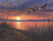 Geese Painting Posters - Sunset Flight Poster by Kim Lockman