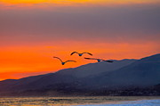 Gloaming Prints - Sunset Flight Print by Maureen J Haldeman
