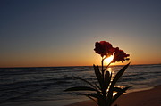 Panama City Beach Prints - Sunset Flower 3 Print by May Photography