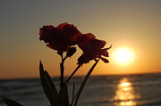 Panama City Beach Prints - Sunset Flowers Print by May Photography