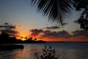 Fronds Prints - Sunset in Paradise Print by Michelle Wiarda