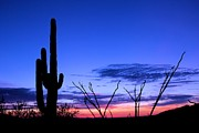Elizabeth Budd - Sunset in Saguaro...