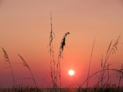 York Beach Digital Art Prints - Sunset in Tall Grass Print by Bill Cannon