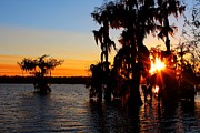Caitlyn Stykowski - Sunset in the Cypress...