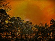 David Dehner Framed Prints - Sunset in the Forest Framed Print by David Dehner