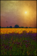 Colorful Sunsets Posters - Sunset In The Meadow Poster by Tom York