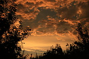 Cari Gesch Metal Prints - Sunset in the Orchard Metal Print by Cari Gesch