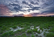 Sunset In The Swamp Print by Eti Reid