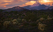 Dusky Prints - Sunset lit Cactus over Four Peaks Print by Dave Dilli