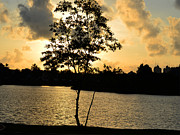 Nalini Pitigala - Sunset on Diyatha Lake..