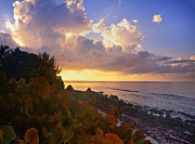 Tropical Foliage Posters - Sunset on Little Cayman Poster by Stephen Anderson