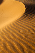Oman Prints - Sunset on sand dunes in Dubai Print by Fototrav Print