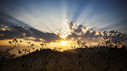Ray Photo Prints - Sunset on the mountain Print by Setsiri Silapasuwanchai