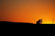 Sunset Posters Prints - Sunset Over The Cornfields Print by Fred Potter