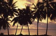 Featured Prints - Sunset Palm Trees Print by Paul Miles