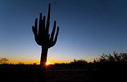 Colt Forney - Sunset Saguaro