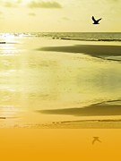 Sand And Sea Posters - Sunset sand Poster by Sharon Lisa Clarke