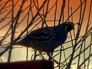Outlook Photos - Sunset Sentinel by Cindy Wright
