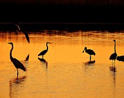 Wading Bird Posters - Sunset Silhouette Poster by Al Powell Photography USA