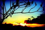 The Creative Minds Art and Photography - Sunset Silhouettes