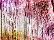 Kathi Mirto - Sunset Snow Twigs