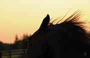 Horse Pictures Posters - Sunset Spirit Poster by Renee Forth Fukumoto