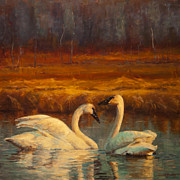 Swans... Prints - Sunset Swans Print by Jeanne Young