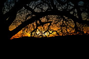 Liz Vernand - Sunset through the Oak