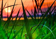 Sea Isle City Framed Prints - Sunset Through the Reeds Framed Print by Gary Wiesner