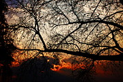 Sunset Through The Trees Print by Aidan Moran