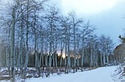 Big Horn  Photography - Sunset Thru Aspens