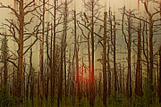 The Jersey Devil Posters - Sunset thru the Pine Barrens Poster by Gallery Three
