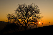 Silhouetted Posters - Sunset Tree Poster by Anne Gilbert