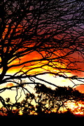 Sunset Tree Silhouette Print by The Creative Minds Art and Photography