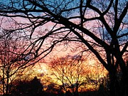 Sunset Under The Dogwoods Print by Judy Via-Wolff