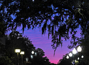 Florida Gators Framed Prints - Sunset University of Florida Campus Framed Print by Claudette DeRossett