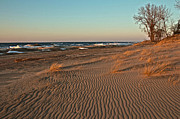 Indiana Dunes Posters - SunShine and Sand  Poster by Lynne Dohner