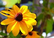 Shaileen Landsberg - Sunshine Blossom