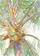 Coconut Paintings - Sunshine Coconuts by Dorothy Boyer