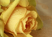 Sunshine Delight Yellow Rose Print by Inspired Nature Photography By Shelley Myke