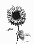 Sunflowers Drawings - Sunshine Love by J Ferwerda