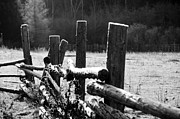 Winter Scenes Rural Scenes Framed Prints - Sunshine on the Frosty fence Framed Print by Cheryl Baxter